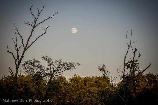 Sunset, Moonrise Solace