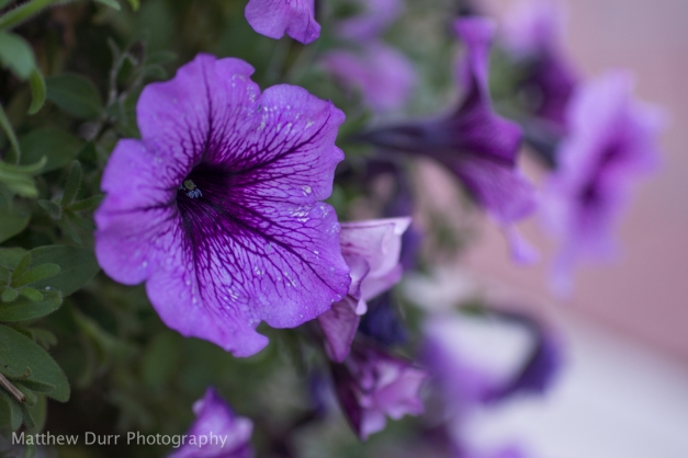 Creamy Purple