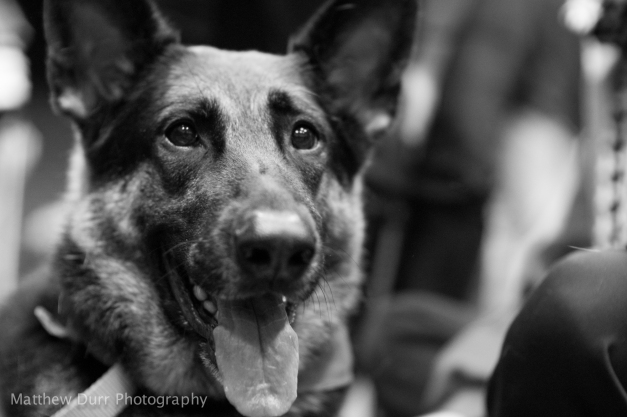 Thought this German Shepard was begging to be made into B&W