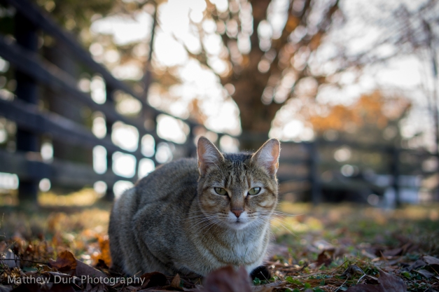 Farm Cat35mm, ISO 100, f/2.2, 1/320