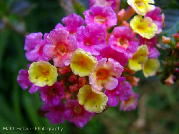 Bunches of Color!6mm, ISO 80, f/2.8, 1/125