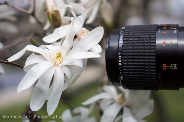 Photo-Man 35mm, ISO 100, f/1.8, 1/3200