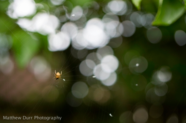 Web-Spinner 32mm, ISO 100, f/2.2, 1/100