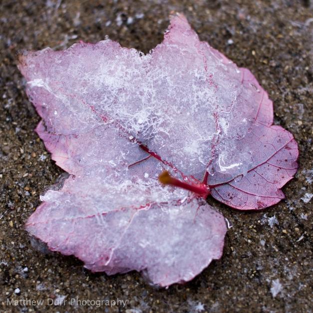 When Fall Meets Winter Zeiss Touit 32mm, f/2.8, 1/160