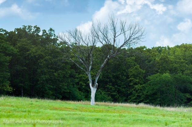 Lone Tree Nikon 400mm, ISO 100, f/2.8, 1/1600, 16 images stitched