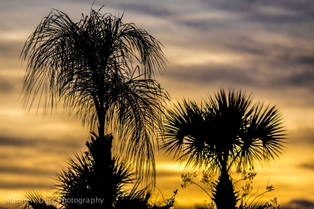 Feeling Warm 200mm, ISO 100, f/2.8, 1/640 At f/2.8 while shooting close to infinity, the 200mm f/2 AI-s still creates a shallow depth-of-field to blur out the background clouds during a setting sun, while keeping in-focus palm trees sharp.
