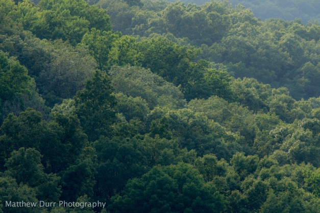 Trees and Trees Nikon 400mm, ISO 100, f/5.6, 1/320