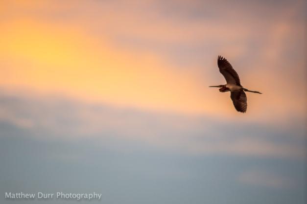 Heron Against Sky Nikon 200mm, ISO 400, f/2, 1/500