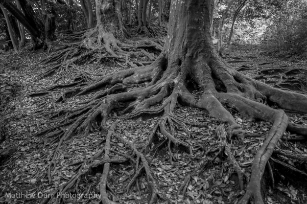 Gnarly 16mm, ISO 100, f/2.8, 1/60