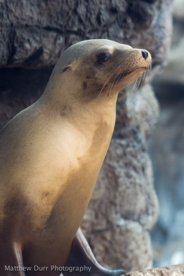 Sea Lion 105mm, ISO 400, f/2.8, 1/125