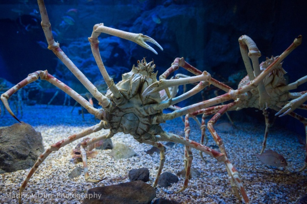 Spider Crab 16mm, ISO 1600, f/2.8, 1/60