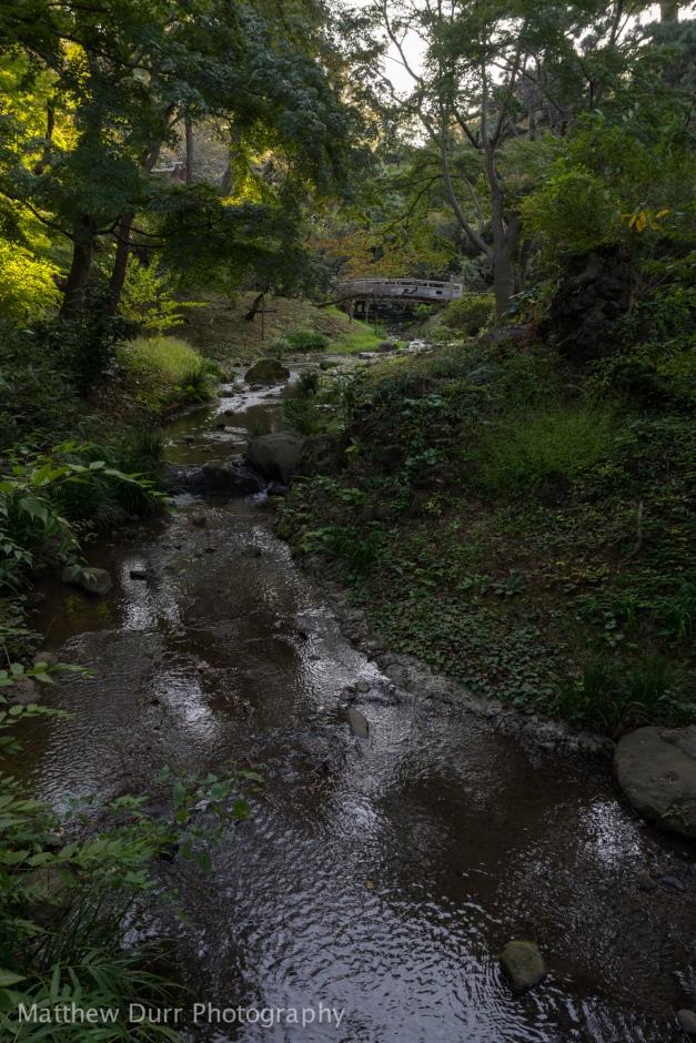 Dark Stream 16mm, ISO 100, f/5.6, 1/50