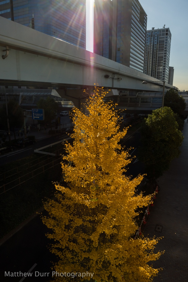 Ginko Illumination 16mm, ISO 100, f/5.6, 1/1000