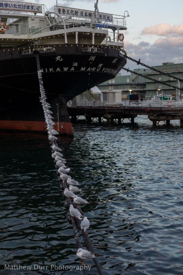 Hikawa Maru Seabirds 32mm, ISO 100, f/1.8, 1/500