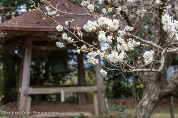 Early Blossoms with Ogane 32mm, ISO 100, f/5.6, 1/60